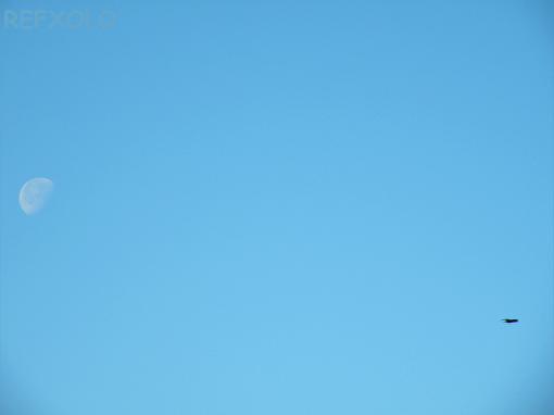 朝の空に月と鳥