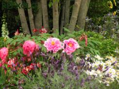 写真:株立ちの木元の花々の画像