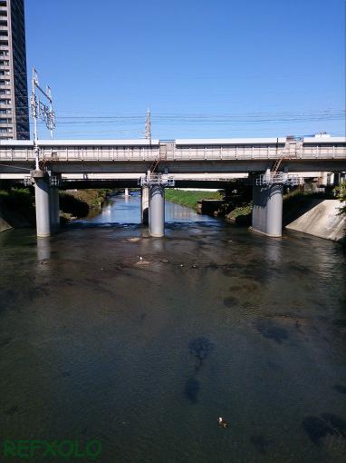 鴨と川の流れ