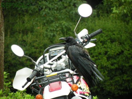 写真:Crow&Motorbikeの画像