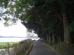佐鳴湖湖岸小道