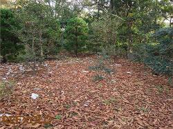 落ち葉が地面一面に。