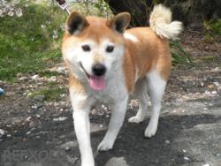 写真:8歳の雌犬ランの画像