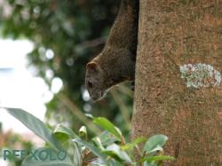 写真:木から降りようとしているリスの画像
