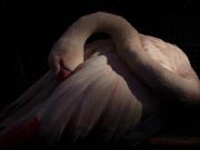 うずくまる鳥2008-02-01