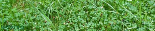 写真:雨に濡れた草の画像
