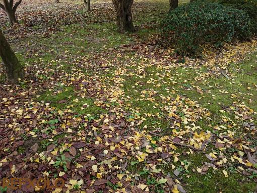 銀杏やブナなどの落ち葉