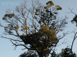 kounotori-tree.jpg